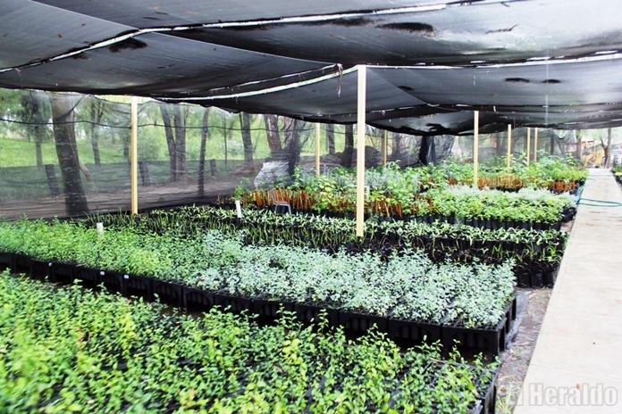 Moderniza gobierno del estado su sistema de viveros el for Viveros en salto