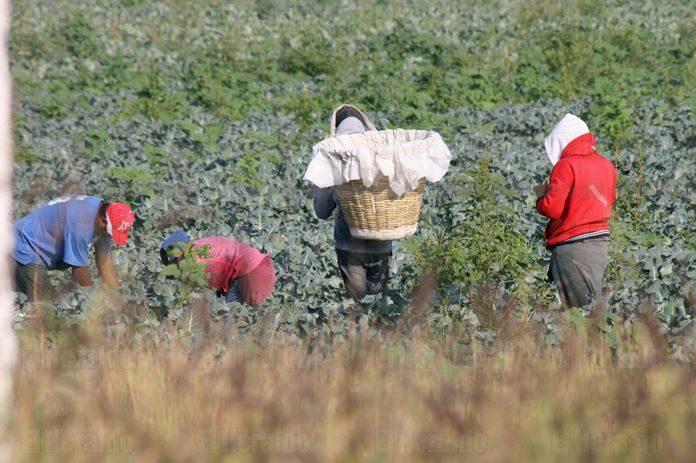 En manos privadas, 41% de los terrenos rurales: Inegi