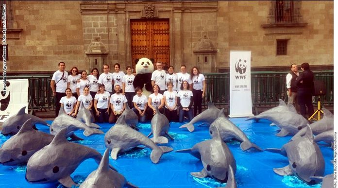 Piden con firmas salvar a vaquita marina